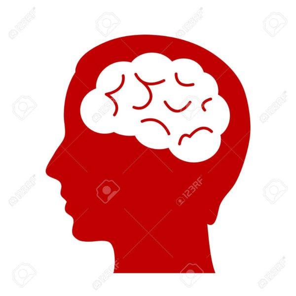 cerveau androcur